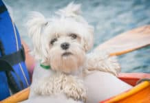 Kayaking-With-Your-Dog