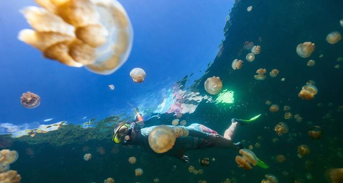 snorkeling-in-Jellyfish-Lake