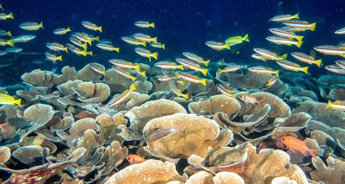 snorkeling-in-blue-lagoon-brazil