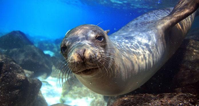 snorkeling-in-the-Galapagos-Islands-Ecuador