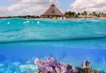 Best-Snorkeling-Spots-In-Cancun