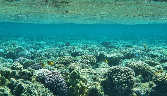 Coral-Gardens-Maui