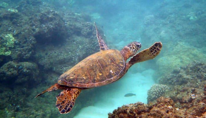 Hideaways-Beach-Kauai