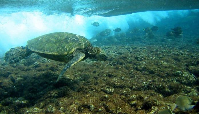Kee-Beach-Kauai