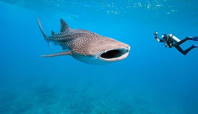 Underwater-photography-paitence