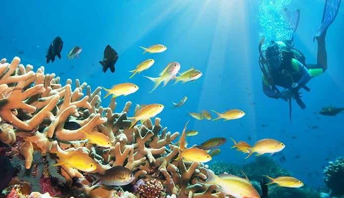 Oahu-Scuba-Diving