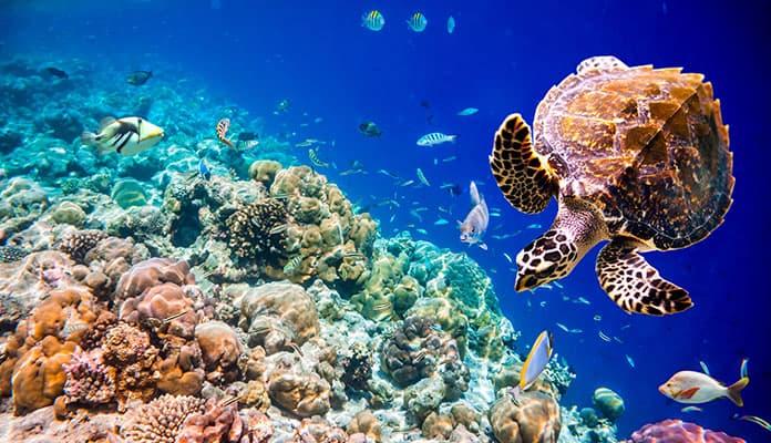 Oahu-Snorkeling