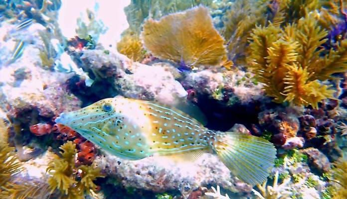 western sambo reef