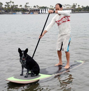 Pup Deck SUP Traction Pad for Dogs Stand Up Paddleboard Deck