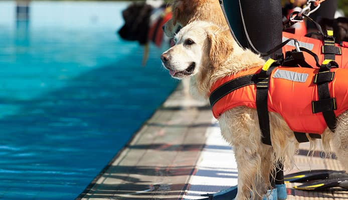 Best_Dog_Life_Jackets