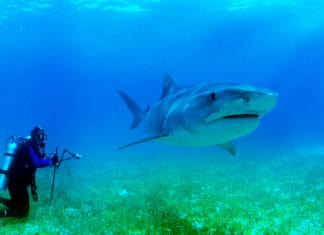 shark-repellents