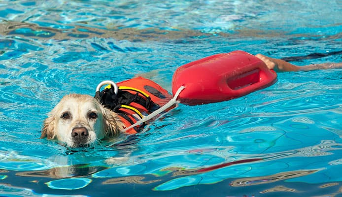 How_to_Choose_A_Dog_Life_Jacket