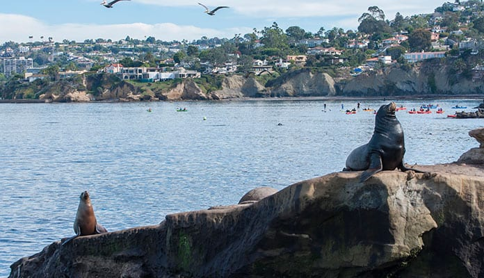 Kayaking In La Jolla All You Need To Know Before You Go