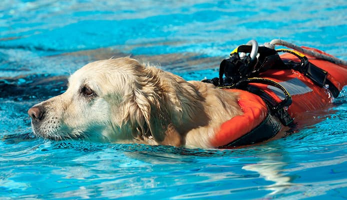 When_My_Dog_Needs_a_Life_Jacket