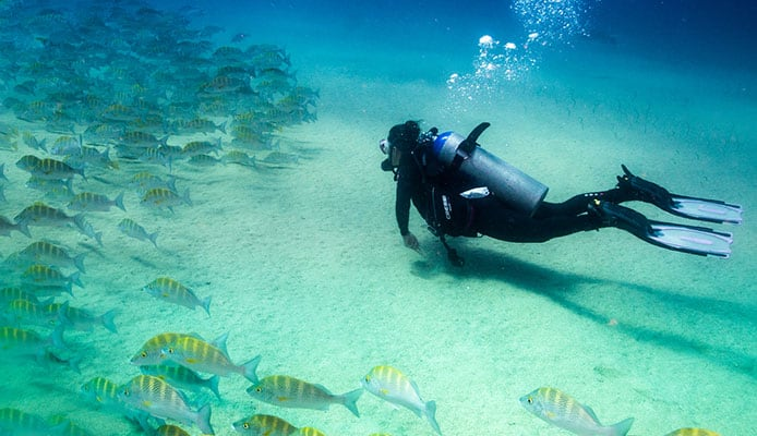 People_diving_in_the_caribbean_sea