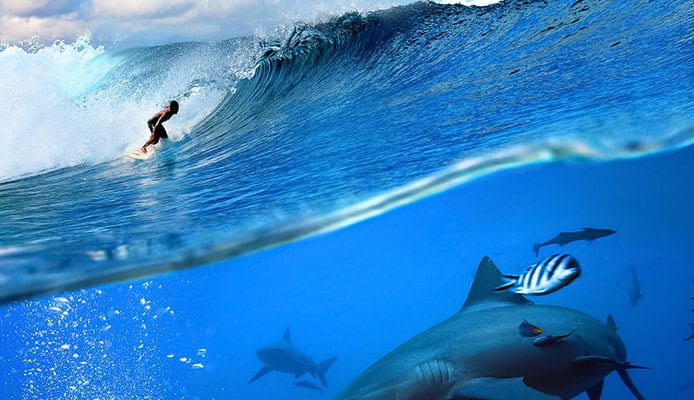 The_Reality_Of_Sharks_And_Surfing