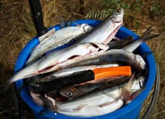 Best_Fishing_Knives