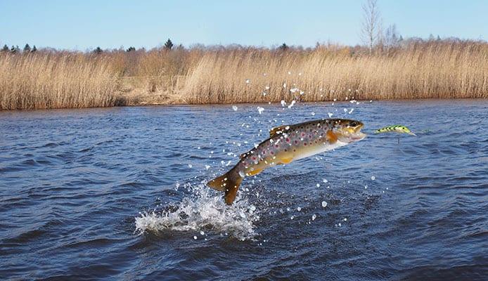 Best_Salmon_Lures