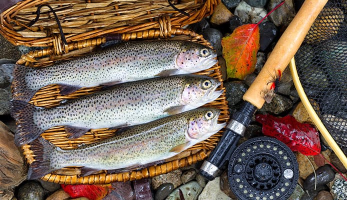 How_to_Choose_the_Best_Trout_Spinning_Reel