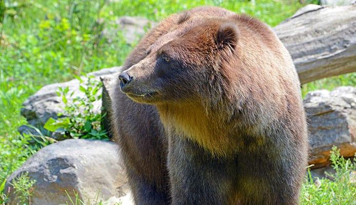 HOw_To_Choose_A_Bear_Spray
