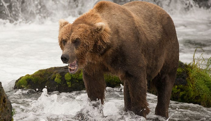 What_Is_A_Bear_Spray_And_How_It_Works