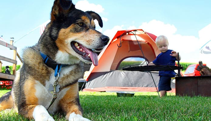 Best_Dog_Camping_Gear