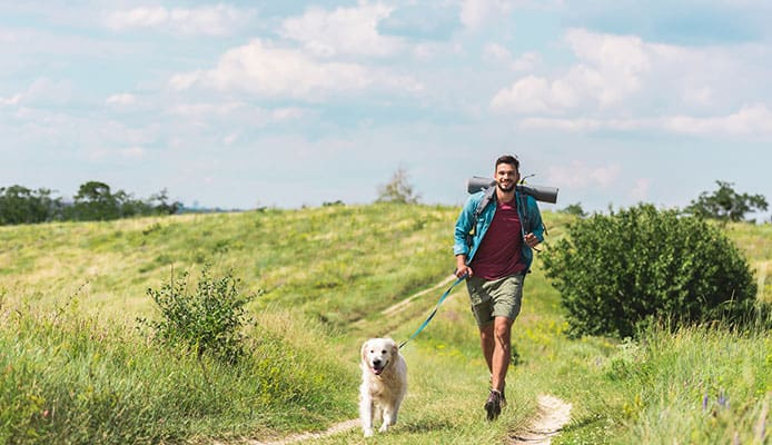 10 Best Dog Harnesses For Hiking in 2019 [Buying Guide