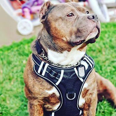 Babyltrl No Pull Big Dog Harness