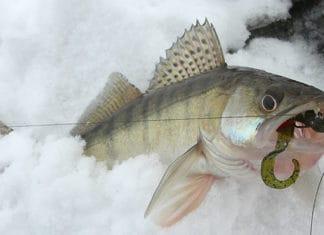 Drop_Shot_Fishing_How_To_Fish_A_Drop_Shot_Rig