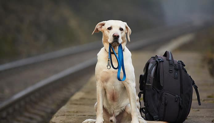 How_To_Choose_A_Dog_Backpack