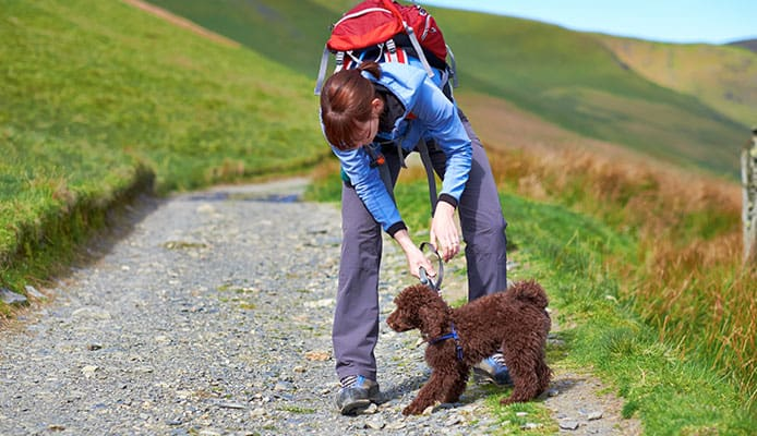 How_To_Choose__Dog_Harnesses_For_Hiking