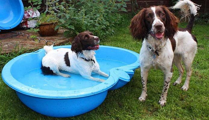 How_To_Choose_A_Dog_Pool