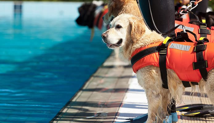 Life_jackets_helps_to_pull_the_pooch_out_of_the_water