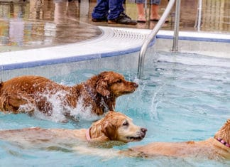 Pets_Swimming_Pool_Safety_Guide