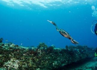 10_Best_Dive_Sites_In_Belize