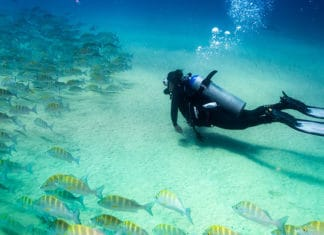 10_Best_Dive_Sites_In_Cozumel