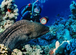 Diving_With_Moray_Eels