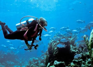 How_To_Get_Open_Water_Diving_Certification
