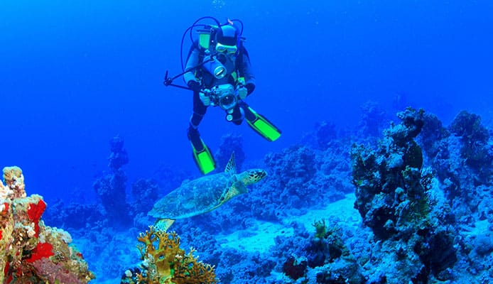 10 Best Diving Spots In California