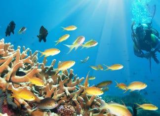 10_Best_Diving_Spots_In_Cayman_Islands