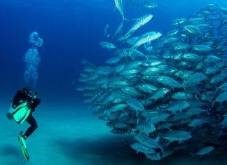 10_Best_Diving_Spots_In_Costa_Rica