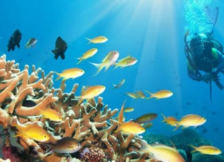 10_Best_Diving_Spots_In_Cuba