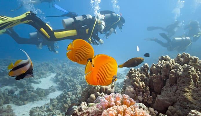 10_Best_Diving_Spots_In_Dominican_Republic