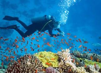 10_Best_Diving_Spots_In_Maldives