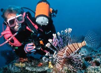 10_Best_Diving_Spots_In_Mozambique