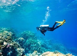 10_Best_Diving_Spots_In_New_Zealand