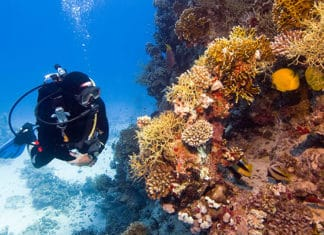 10_Best_Diving_Spots_In_South_Africa