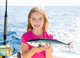 Bonito_Fish_Fishing_Guide