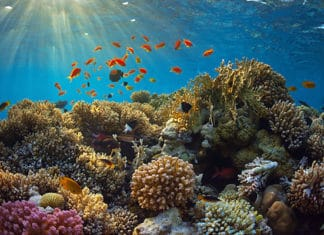 Bottom_Fishing_for_Reef_Fish