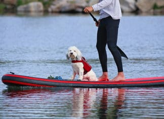 How_to_Teach_Your_Dog_To_Paddle_Board